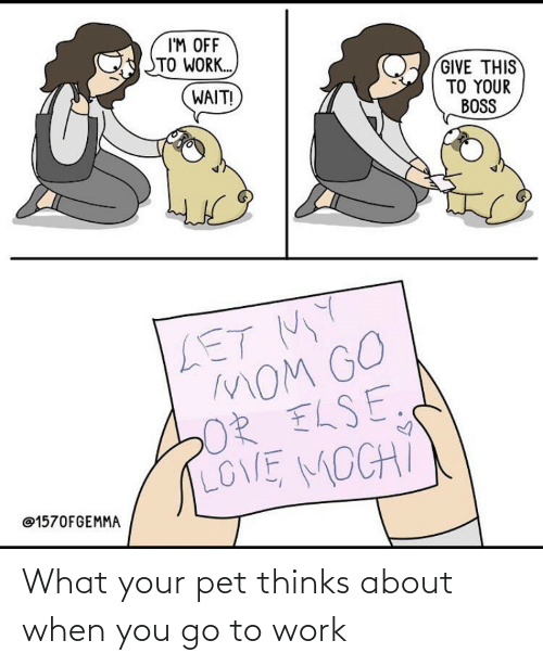when you: What your pet thinks about when you go to work