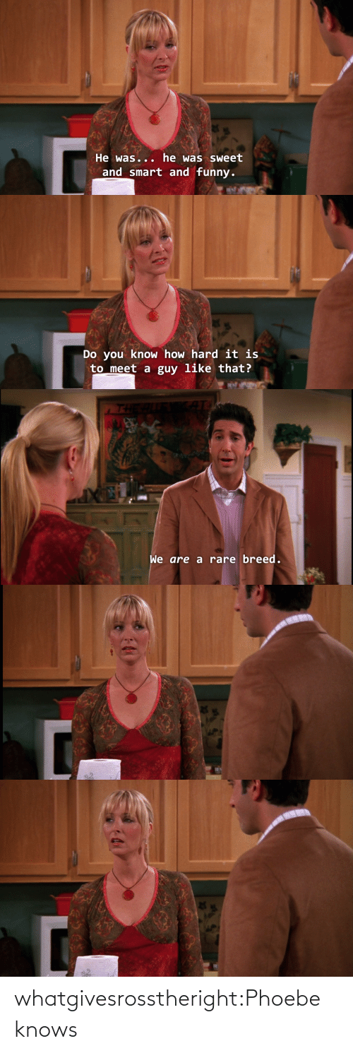 Knows: whatgivesrosstheright:Phoebe knows