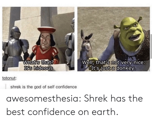 Confidence, Donkey, and God: Whatis that?  Is hideous  Well: that's not very nice.  lt's Just a donkey  totonut:  shrek is the god of self confidence awesomesthesia:  Shrek has the best confidence on earth.