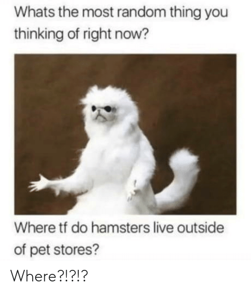 random: Whats the most random thing you  thinking of right now?  Where tf do hamsters live outside  of pet stores? Where?!?!?