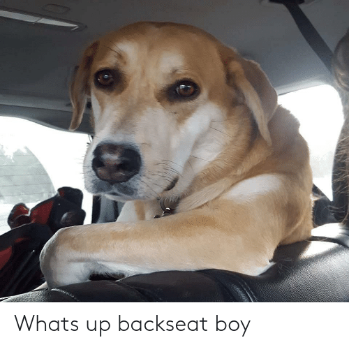 Boy, Whats, and Whats Up: Whats up backseat boy