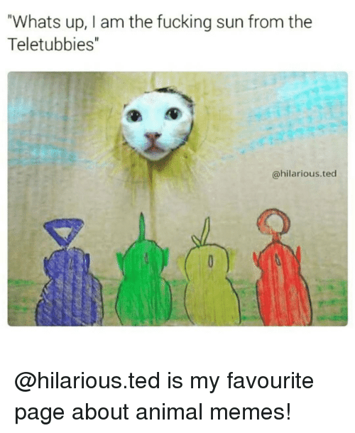 "Memes, Teletubbies, and 🤖: Whats up, I am the fucking sun from the  Teletubbies""  @hilarious ted @hilarious.ted is my favourite page about animal memes!"