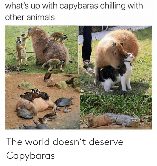 Animals, World, and The World: what's up with capybaras chilling with  other animals  C The world doesn't deserve Capybaras