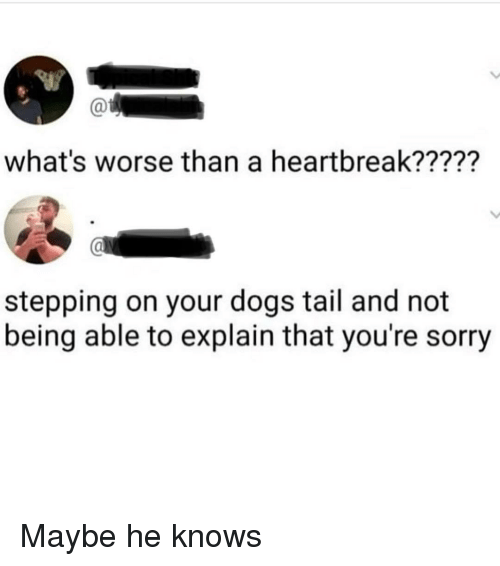 Dogs, Sorry, and Whats: what's worse than a heartbreak?????  stepping on your dogs tail and not  being able to explain that you're sorry Maybe he knows