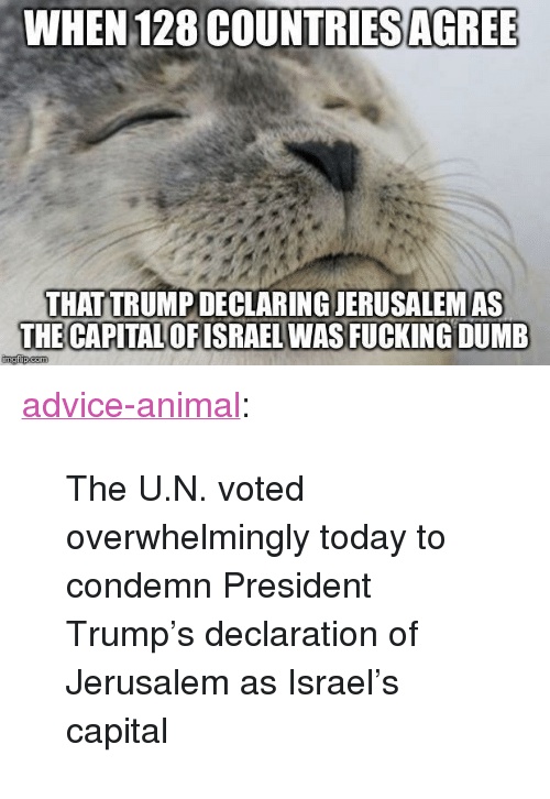 "Advice, Dumb, and Fucking: WHEN 128 COUNTRIES AGRE  THAT TRUMPDECLARING JERUSALEMAS  THE CAPITAL OFISRAEL WAS FUCKING DUMB <p><a href=""http://advice-animal.tumblr.com/post/168837351915/the-un-voted-overwhelmingly-today-to-condemn"" class=""tumblr_blog"">advice-animal</a>:</p>  <blockquote><p>The U.N. voted overwhelmingly today to condemn President Trump's declaration of Jerusalem as Israel's capital</p></blockquote>"