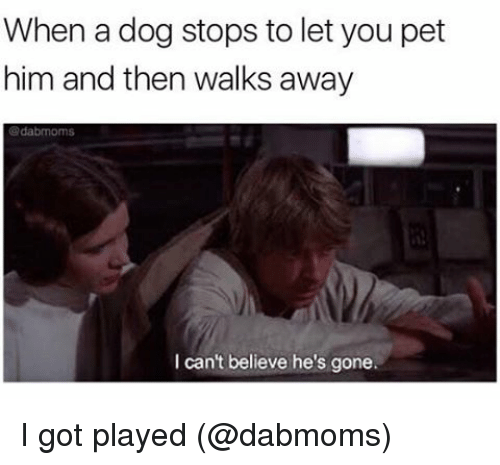 Memes, 🤖, and Got: When a dog stops to let you pet  him and then walks away  da brnoms  I can't believe he's gone. I got played (@dabmoms)