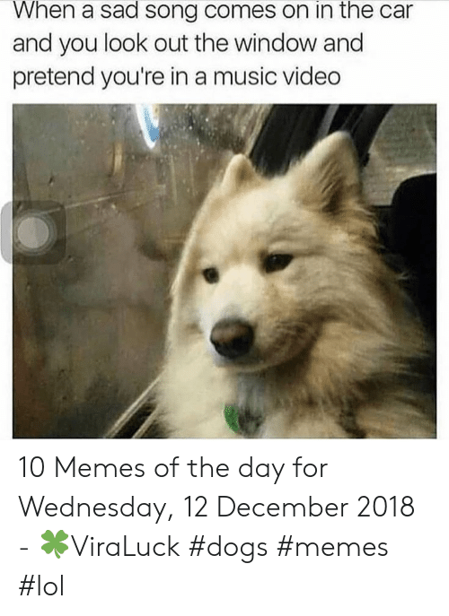 Dogs, Lol, and Memes: When a sad song comes on in the car  and you look out the window and  pretend you're in a music video 10 Memes of the day for Wednesday, 12 December 2018 - 🍀ViraLuck #dogs #memes #lol