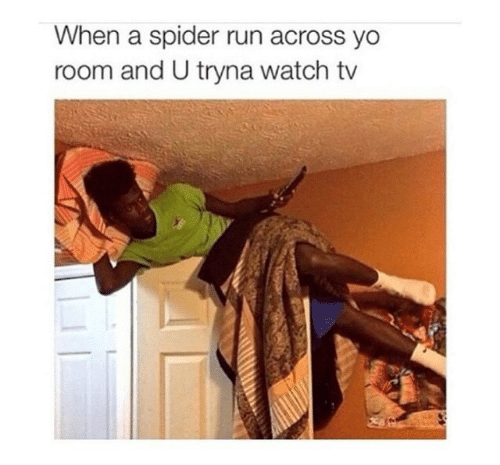 Run, Spider, and Yo: When a spider run across yo  room and U tryna watch tv