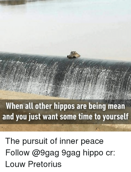 Hippoe: When all other hippos are being mean  and you just want some time to yourself The pursuit of inner peace Follow @9gag 9gag hippo cr: Louw Pretorius