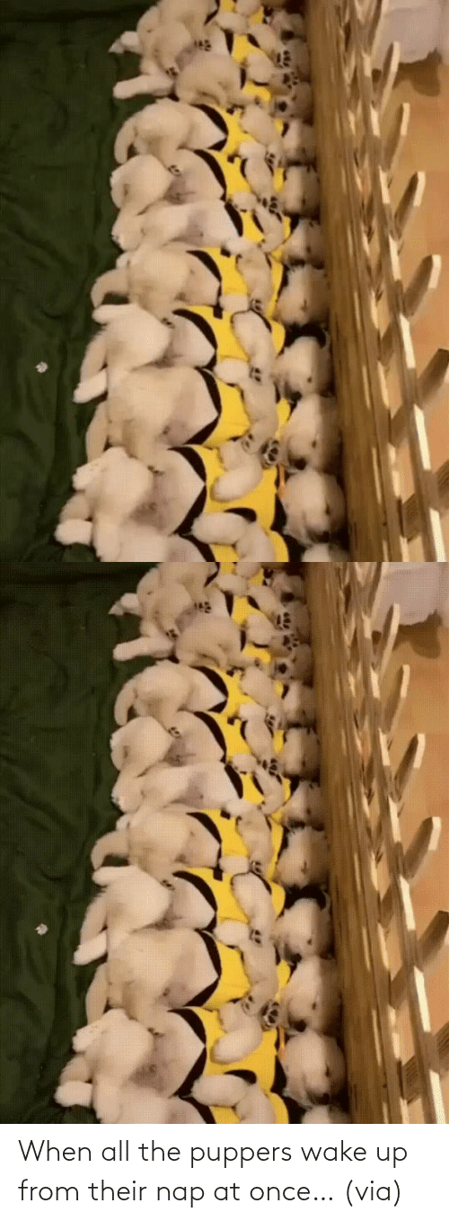 wake: When all the puppers wake up from their nap at once…(via)