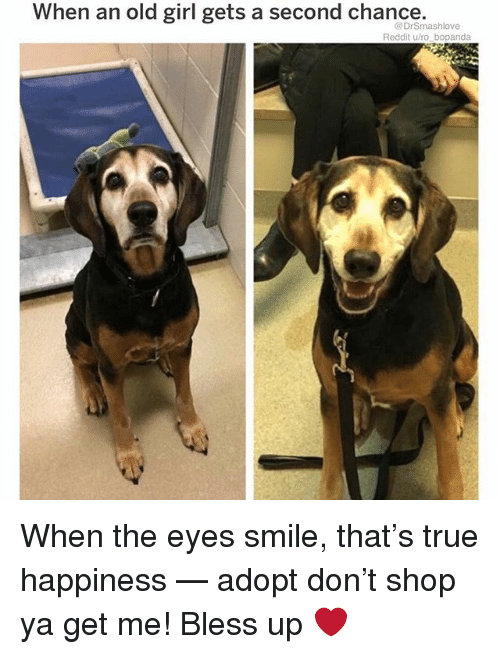 Bless Up, Memes, and Reddit: When an old girl gets a second chance,  @DrSmashlove  Reddit u/ro bopanda When the eyes smile, that's true happiness — adopt don't shop ya get me! Bless up ❤️