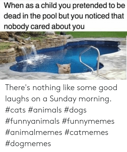 Animals, Cats, and Dogs: When as a child you pretended to be  dead in the pool but you noticed that  nobody cared about you There's nothing like some good laughs on a Sunday morning.  #cats #animals #dogs #funnyanimals #funnymemes #animalmemes #catmemes #dogmemes
