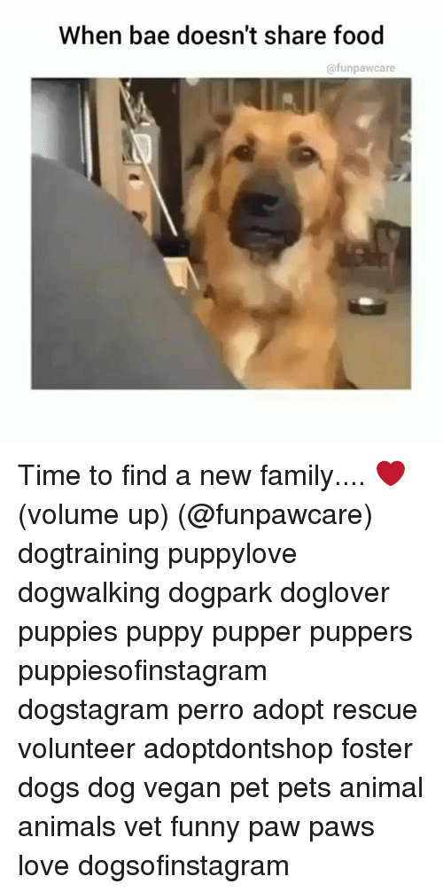 Animals, Bae, and Dogs: When bae doesn't share food  @funpawcare Time to find a new family.... ❤️ (volume up) (@funpawcare) dogtraining puppylove dogwalking dogpark doglover puppies puppy pupper puppers puppiesofinstagram dogstagram perro adopt rescue volunteer adoptdontshop foster dogs dog vegan pet pets animal animals vet funny paw paws love dogsofinstagram
