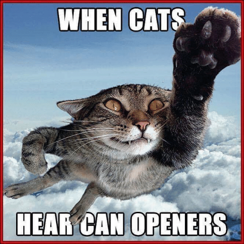 Cats, Memes, and 🤖: WHEN CATS  HEAR CAN OPENERS