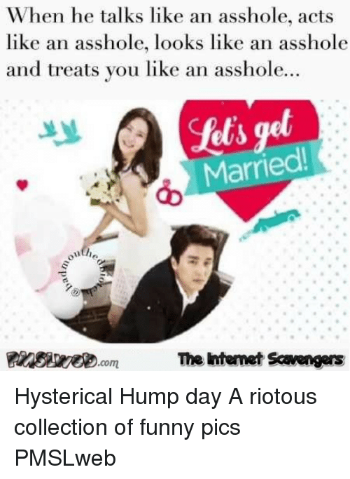Collection Of Funny: When he talks like an asshole, acts  like an asshole, looks like an asshole  and treats you like an asshole.  Married  The htemet Scavengers <p>Hysterical Hump day  A riotous collection of funny pics  PMSLweb </p>