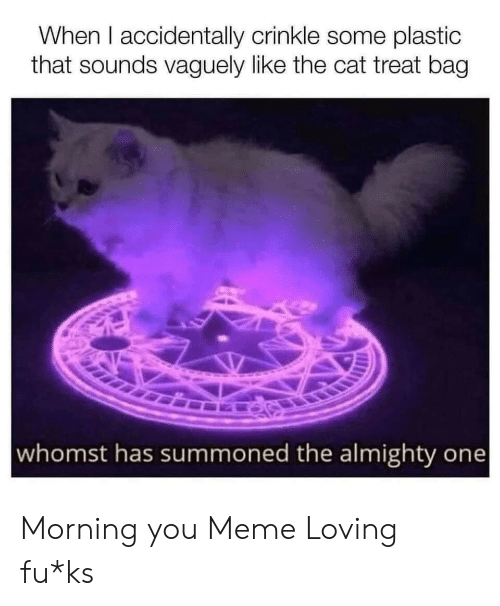 almighty: When I accidentally crinkle some plastic  that sounds vaguely like the cat treat bag  whomst has summoned the almighty one Morning you Meme Loving fu*ks
