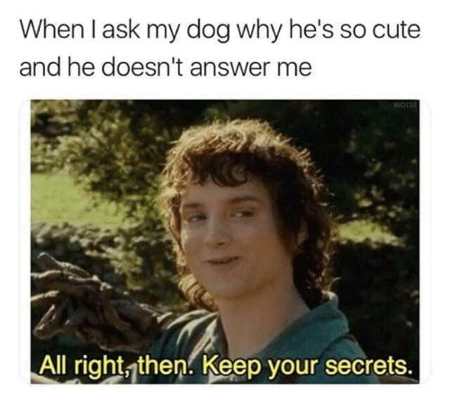 Cute, Answer, and Ask: When I ask my dog why he's so cute  and he doesn't answer me  Wor  All right then Keep your secrets.