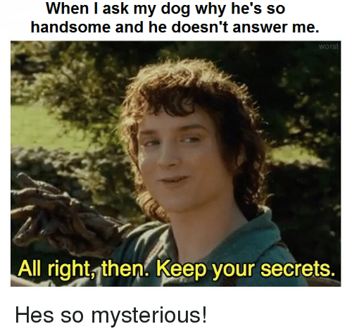 Answer, Ask, and Dog: When I ask my dog why he's so  handsome and he doesn't answer me  worst  All right, then. Keep your secrets. Hes so mysterious!