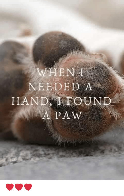 Memes, 🤖, and Hand: WHEN I  NEEDED A  HAND FOUND  A PAW ❤️❤️❤️