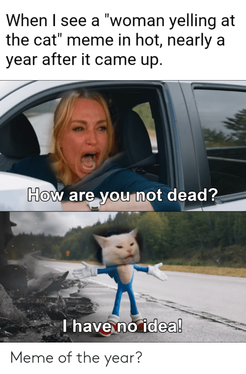 "Meme, How, and Idea: When I see a ""woman yelling at  the cat"" meme in hot, nearly a  year after it came up.  How are you not dead?  T have no idea! Meme of the year?"
