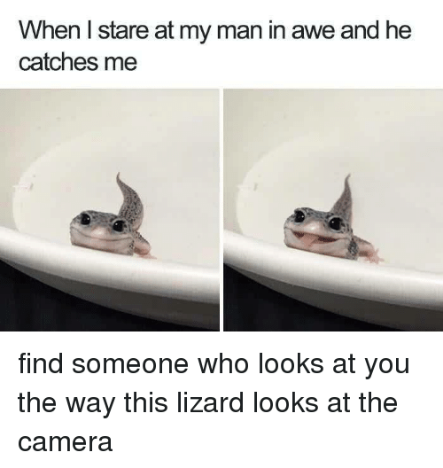 Camera, Who, and Man: When I stare at my man in awe and he  catches me find someone who looks at you the way this lizard looks at the camera