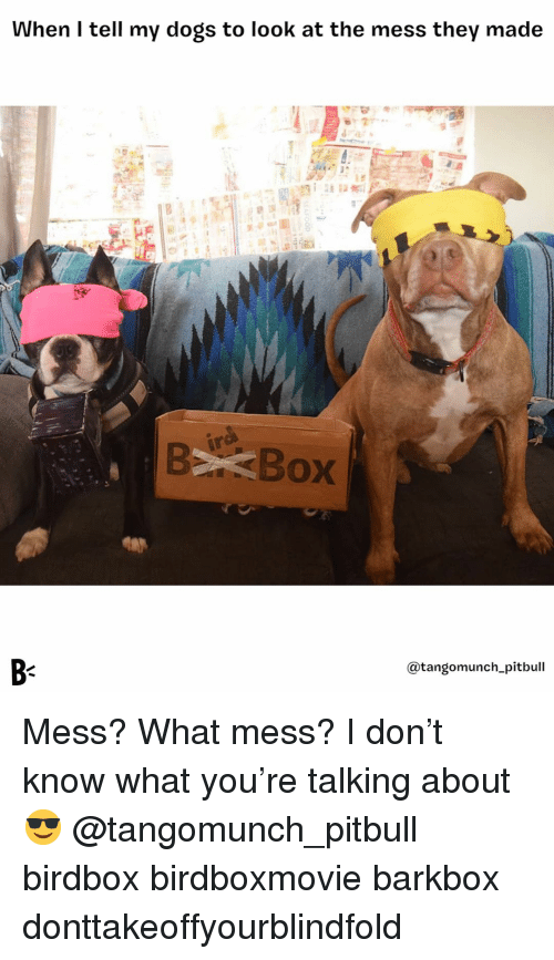 Dogs, Memes, and Pitbull: When I tell my dogs to look at the mess they made  B-  @tangomunch_pitbull Mess? What mess? I don't know what you're talking about 😎 @tangomunch_pitbull birdbox birdboxmovie barkbox donttakeoffyourblindfold
