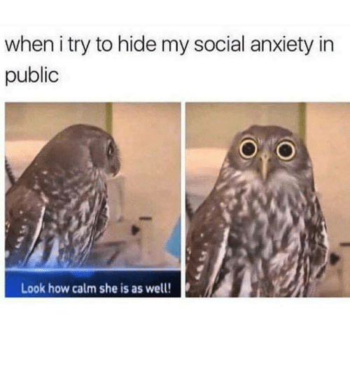 Anxiety, How, and Social Anxiety: when i try to hide my social anxiety in  public  Look how calm she is as well!