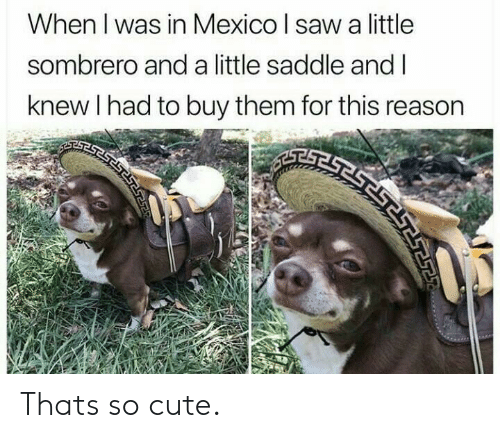 Cute, Mexico, and Reason: When I was in Mexico I sawa little  sombrero and a little saddle and I  knew I had to buy them for this reason Thats so cute.