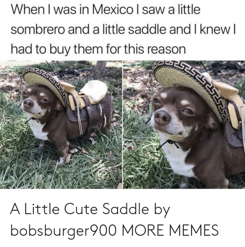 Cute, Dank, and Memes: When I was in Mexico l saw a little  sombrero and a little saddle and I knew  had to buy them for this reason A Little Cute Saddle by bobsburger900 MORE MEMES
