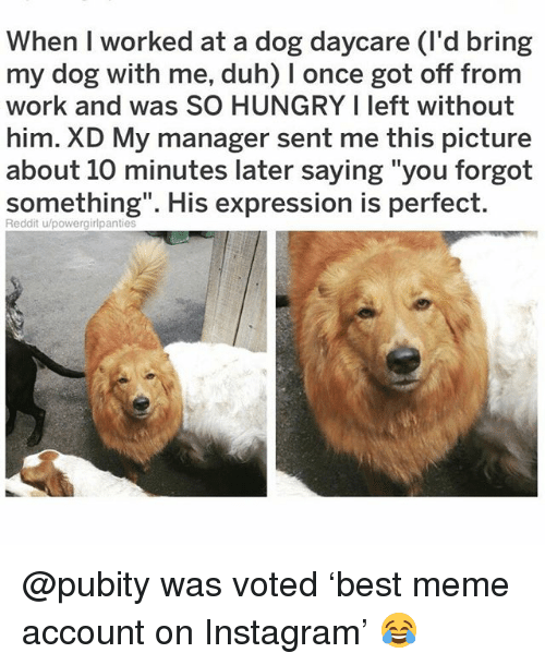 "Hungry, Instagram, and Meme: When I worked at a dog daycare (I'd bring  my dog with me, duh) I once got off from  work and was SO HUNGRY I left without  him. XD My manager sent me this picture  about 10 minutes later saying ""you forgot  something"". His expression is perfect  Reddit u/powergirlpantie @pubity was voted 'best meme account on Instagram' 😂"