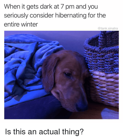 Funny, Winter, and Dark: When it gets dark at 7 pm and you  seriously consider hibernating for the  entire winter  @tank.sinatra Is this an actual thing?