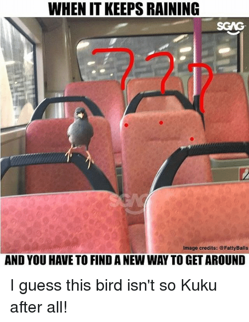 Memes, Guess, and Image: WHEN IT KEEPS RAINING  SGAG  Image credits: @FattyBalls  AND YOU HAVE TO FIND A NEW WAY TO GET AROUND I guess this bird isn't so Kuku after all!