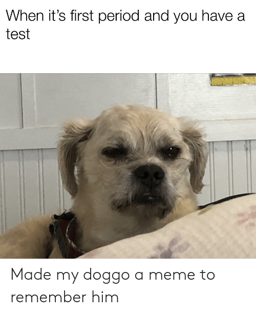 Meme, Period, and Test: When it's first period and you have a  test Made my doggo a meme to remember him
