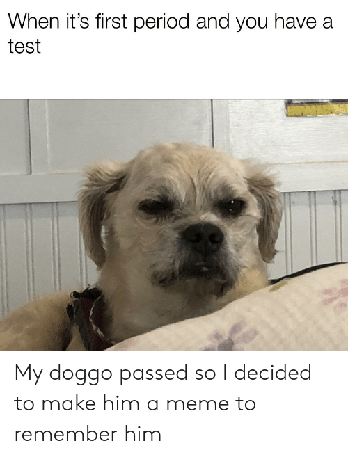 Meme, Period, and Test: When it's first period and you have a  test My doggo passed so I decided to make him a meme to remember him