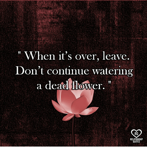 """Memes, Flower, and 🤖: """" When it's over, leave  Don't continue watering  a dead flower,  RO  RELATIONSHIP  QUOTE"""