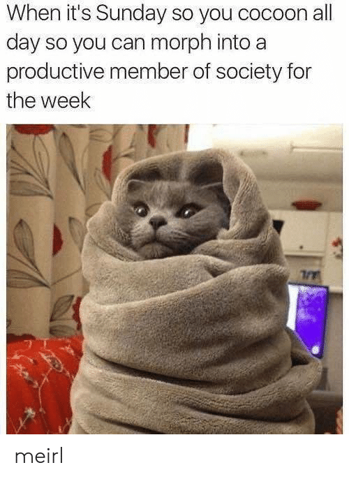 all day: When it's Sunday so you cocoon all  day so you can morph into a  productive member of society for  the week meirl