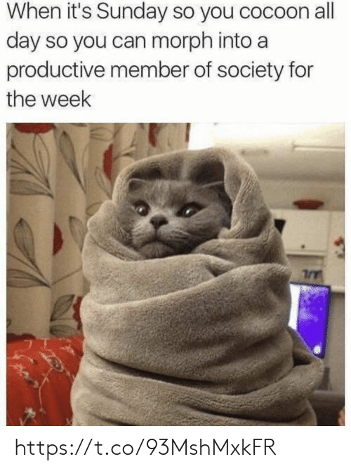 all day: When it's Sunday so you cocoon all  day so you can morph into a  productive member of society for  the week https://t.co/93MshMxkFR