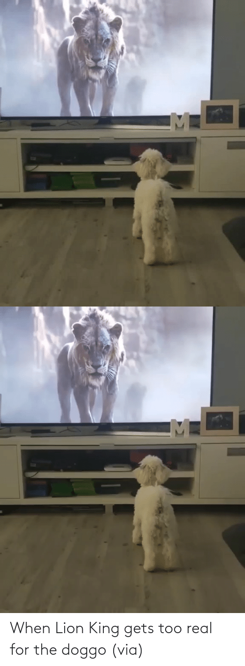 Lion: When Lion King gets too real for the doggo(via)