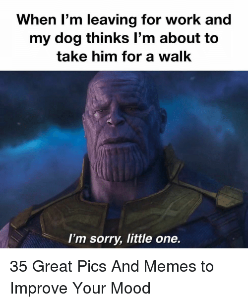 Memes, Mood, and Sorry: When l'm leaving for work and  my dog thinks l'm about to  take him for a walk  I'm sorry, little one. 35 Great Pics And Memes to Improve Your Mood