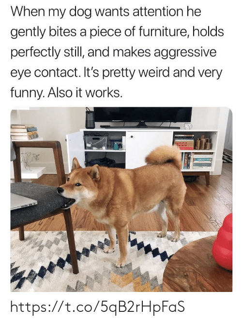 Funny, Memes, and Weird: When my dog wants attention he  gently bites a piece of furniture, holds  perfectly still, and makes aggressive  eye contact. It's pretty weird and very  funny. Also it works. https://t.co/5qB2rHpFaS