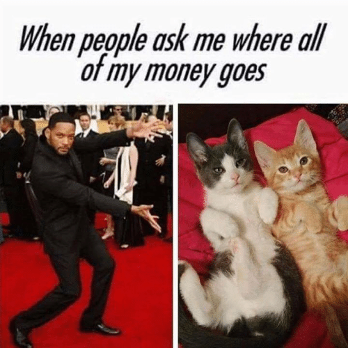 Memes, Money, and 🤖: When people ask me where all  of my money goes