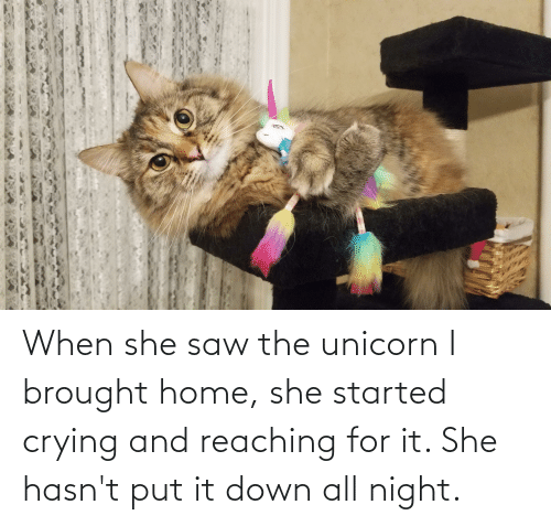 The Unicorn: When she saw the unicorn I brought home, she started crying and reaching for it. She hasn't put it down all night.