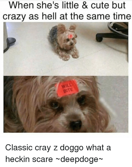 Heckin: When she's little & cute but  crazy as hell at the same time Classic cray z doggo what a heckin scare   ~deepdoge~