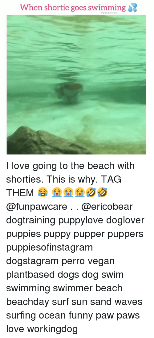 surfing: When shortie goes swimming  @funpawcare I love going to the beach with shorties. This is why. TAG THEM 😂 😭😭😭🤣🤣 @funpawcare . . @ericobear dogtraining puppylove doglover puppies puppy pupper puppers puppiesofinstagram dogstagram perro vegan plantbased dogs dog swim swimming swimmer beach beachday surf sun sand waves surfing ocean funny paw paws love workingdog