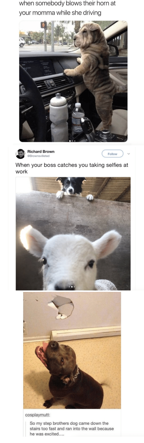 Driving, Step Brothers, and Work: when somebody blows their horn at  your momma while she driving   Richard Brown  @Brownsvilleted  Follow  When your boss catches you taking selfies at  work   cosplaymutt:  So my step brothers dog came down the  stairs too fast and ran into the wall because  he was excited...