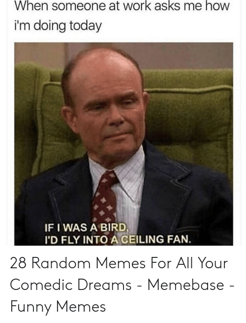 Funny, Memebase, and Memes: When someone at work asks me how  i'm doing today  IF I WAS A BIRD  I'D FLY INTO A CEILING FAN. 28 Random Memes For All Your Comedic Dreams - Memebase - Funny Memes