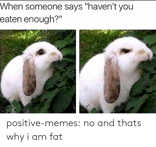 "Memes, Tumblr, and Blog: When someone says ""haven't you  eaten enough?""  Il positive-memes:  no and thats why i am fat"