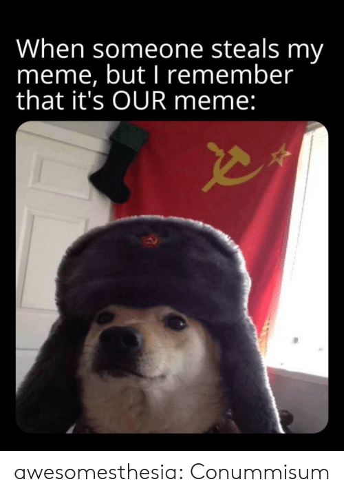 Meme, Tumblr, and Blog: When someone steals my  meme, but I remember  that it's OUR meme: awesomesthesia:  Conummisum