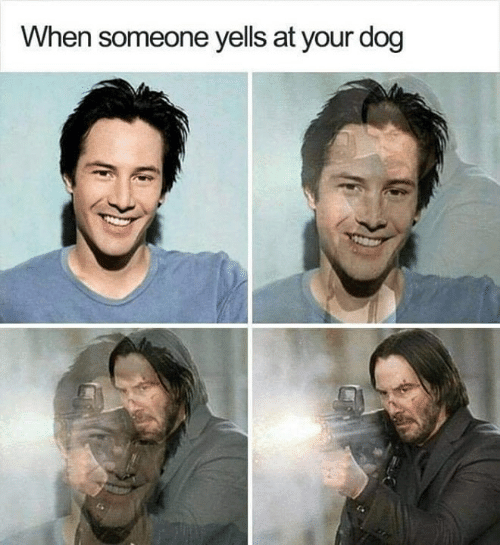 Funny, Tumblr, and Dog: When someone yells at your dog