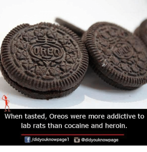 Heroin, Memes, and Cocaine: When tasted, Oreos were more addictive to  lab rats than cocaine and heroin  f/didyouknowpage1 @didyouknowpage